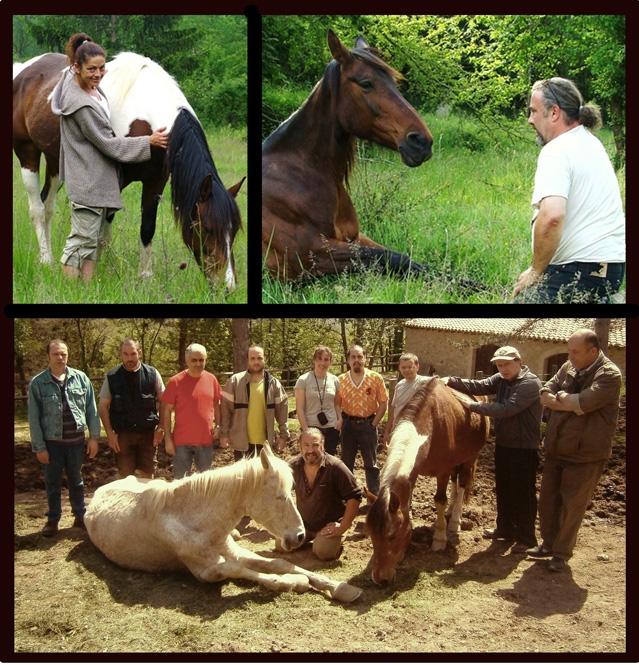 historia-cavalls
